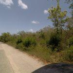 Plot of Land on Left from Cedar Mill Road